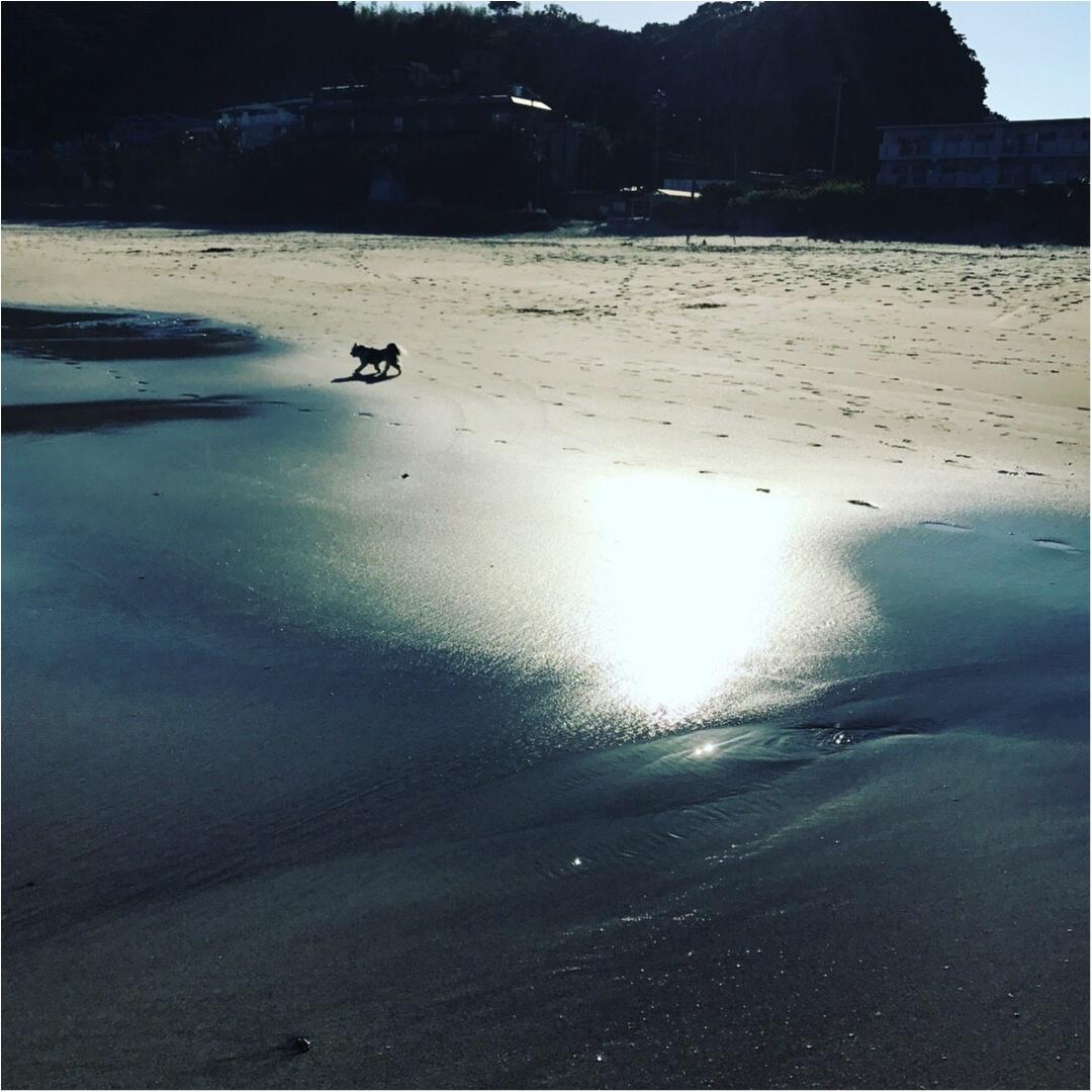 【今日のわんこ】フォトジェニック♡ 太郎くんと海♪_1