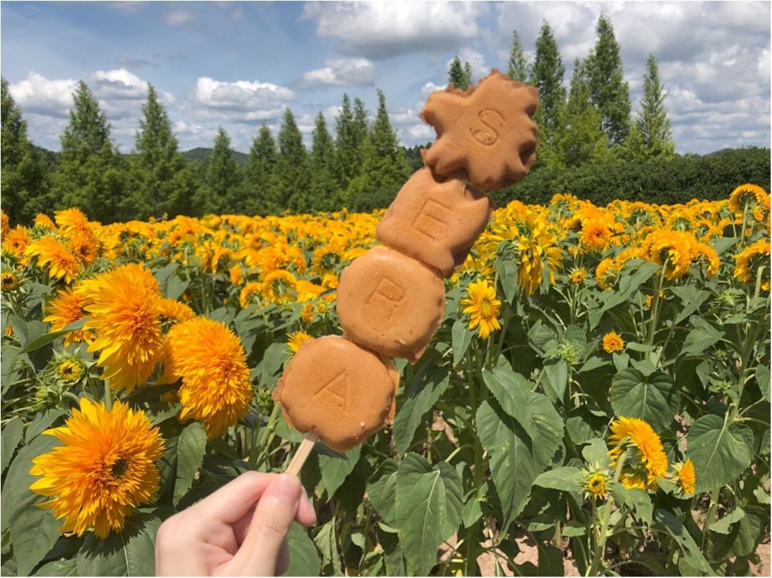 美しい夏の絶景♡ 100万本のひまわりが一面に広がる『ひまわり畑』が見たい♡♡_5