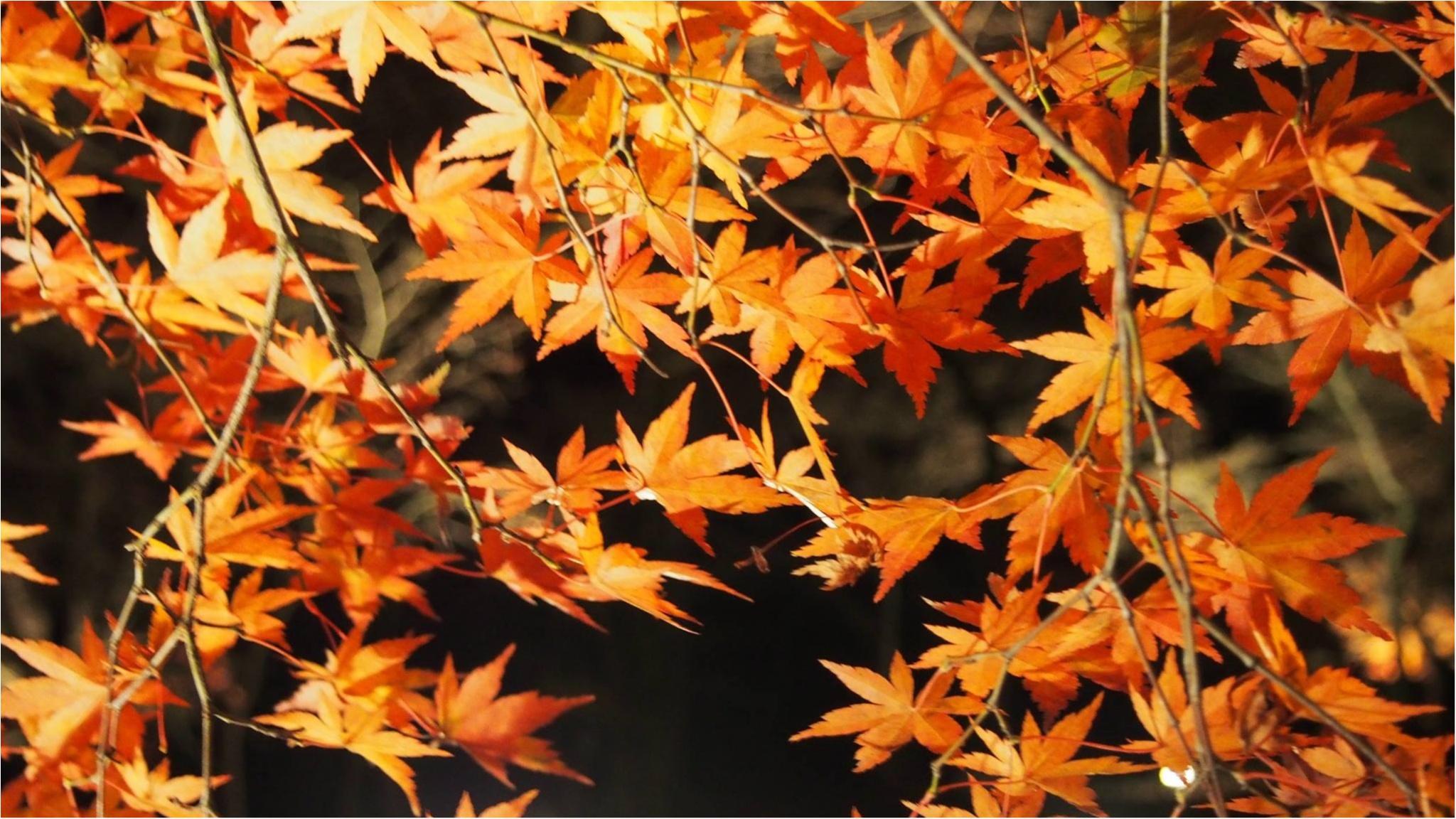 紅葉を満喫♩都心から二時間のとっておきの癒しスポット・秩父長瀞へ!_1