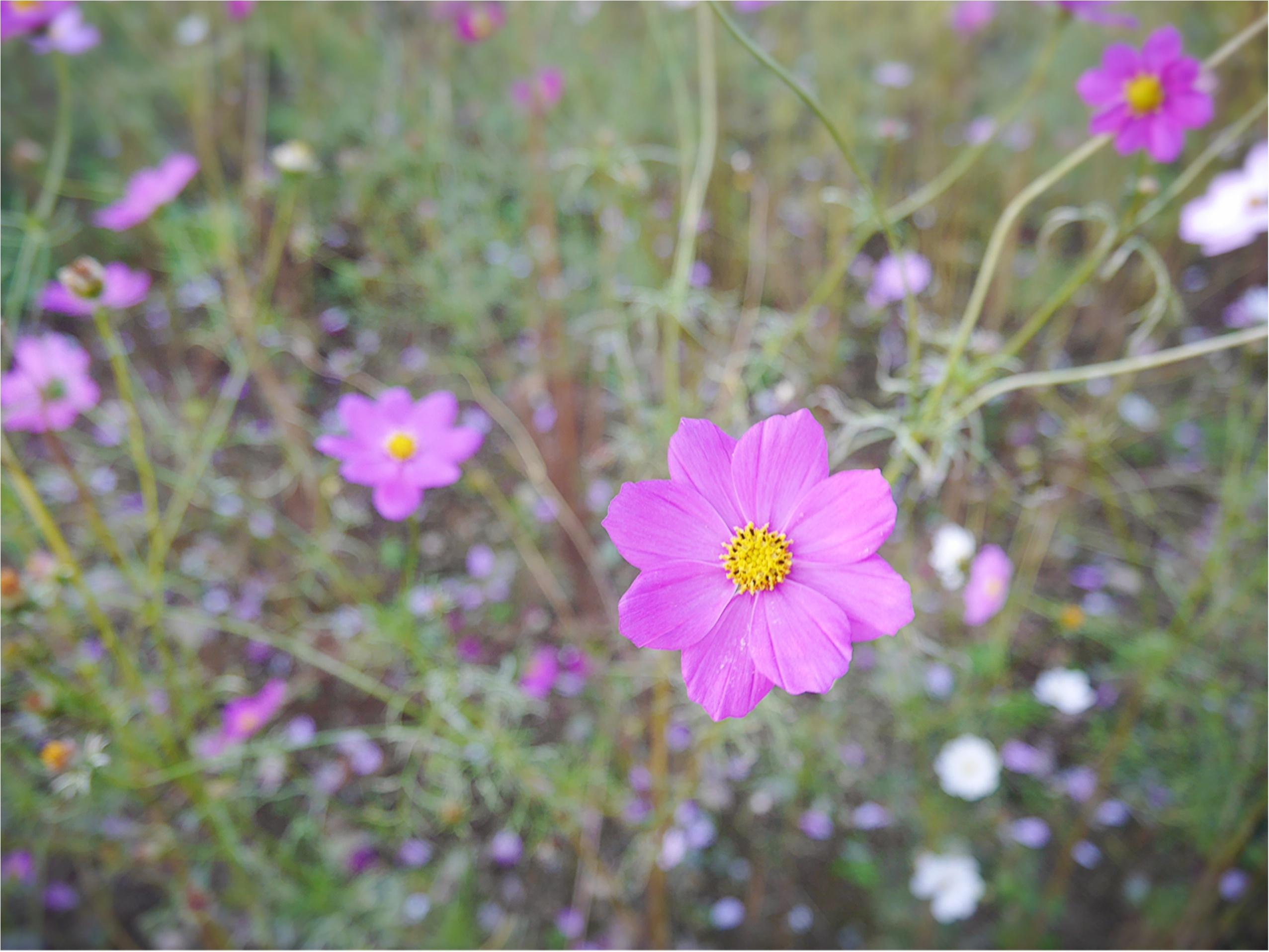 ★晴れた日は、カメラを持って昭和記念公園へ☺︎my camera は『LUMIX』!!_5