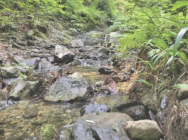 【休日の過ごし方】Go to 高尾山〜小学生ぶりに山登りしてみました〜_3