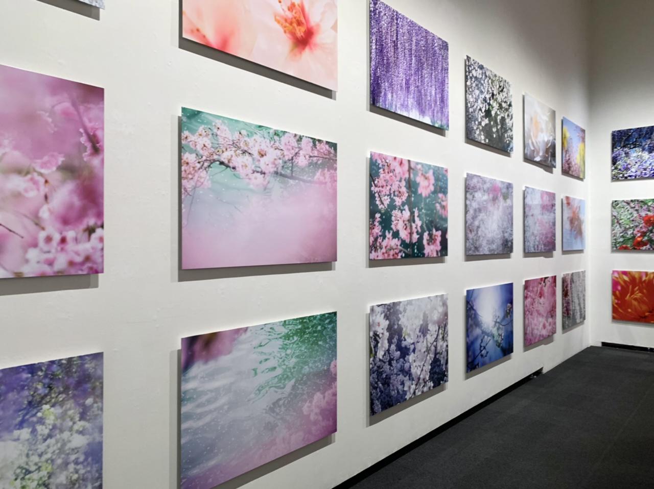 11/14(日)まで!上野の森美術館で開催中の蜷川実花展に行ってきました!_3