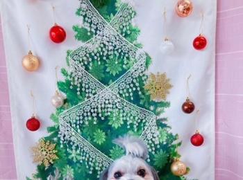 【今日のわんこ】クリスマスをお祝いする太郎くん