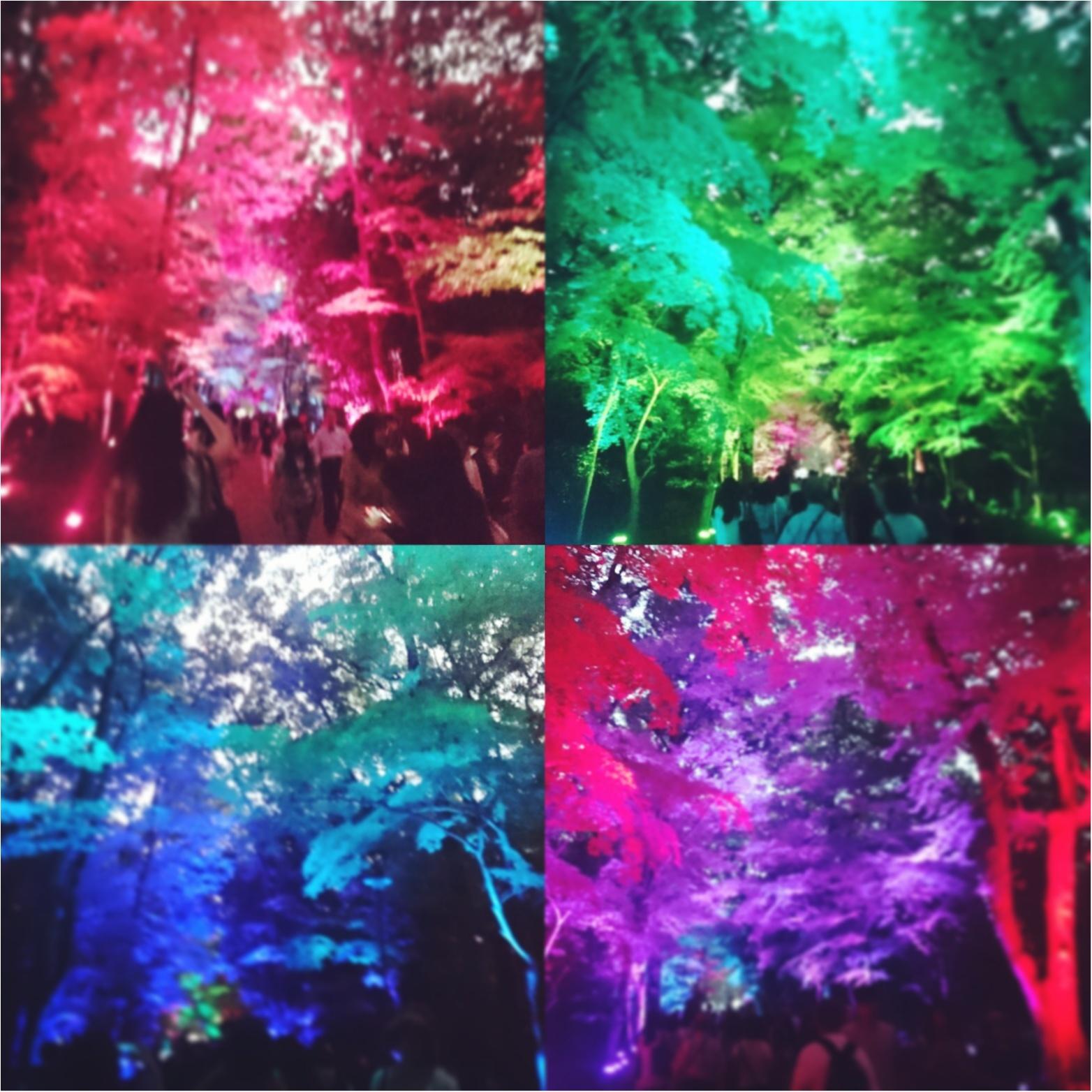 8/31まで‼ teamLabによる光の祭 in Kyoto_1