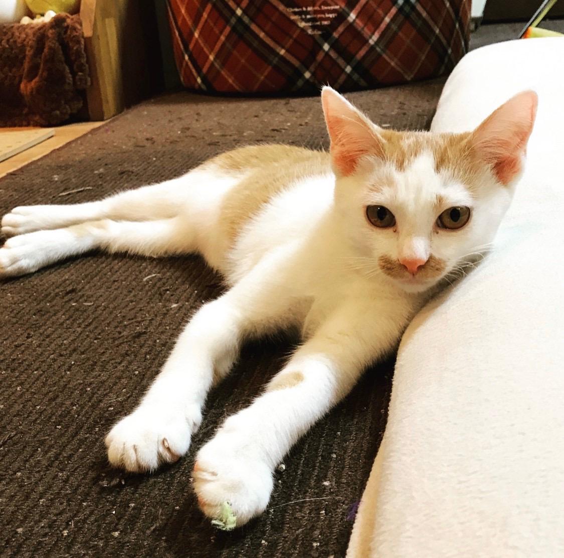 【今日のにゃんこ】子猫時代のラビくんも可愛すぎる♡_1