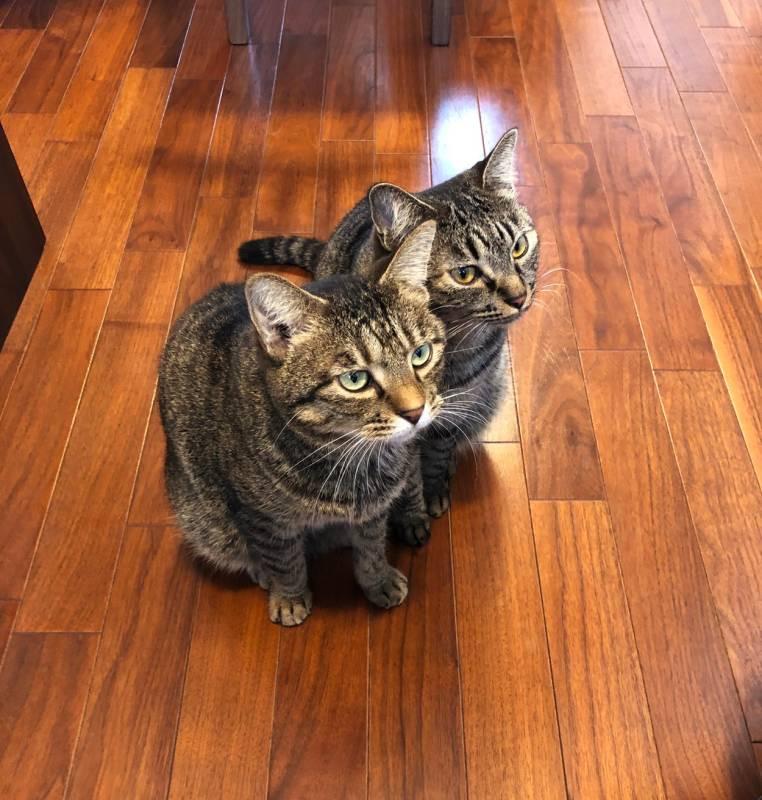 床でご飯を待つ2匹の猫・がんくんとサンちゃん