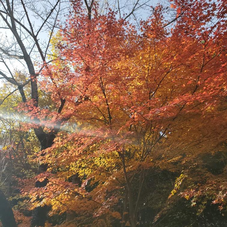 【女子旅におすすめ】兵庫県 紅葉と食べ歩き・温泉を楽しめる有馬温泉街☆_1