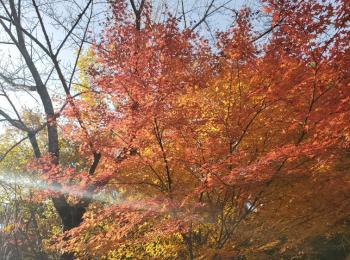 【女子旅におすすめ】兵庫県 紅葉と食べ歩き・温泉を楽しめる有馬温泉街☆