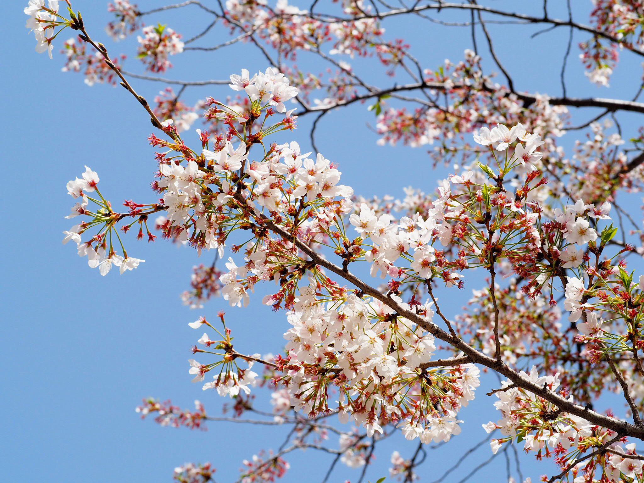 【Fly for ALL #大空を見上げよう】東京の空にニコちゃんマークが出現!一瞬の幸せをシェア☻♡_6
