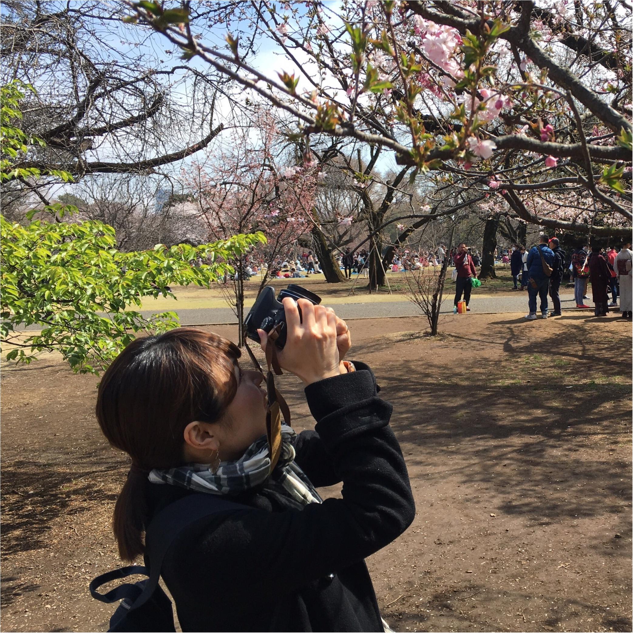 新宿御苑のお花見がゆっくりできるわけ★_2