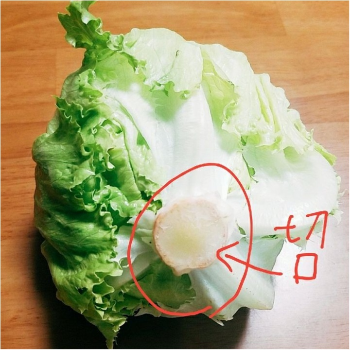 野菜情報!ダイエットに効果的な野菜って?&野菜の見分け方 【#モアチャレ 農業女子】_3