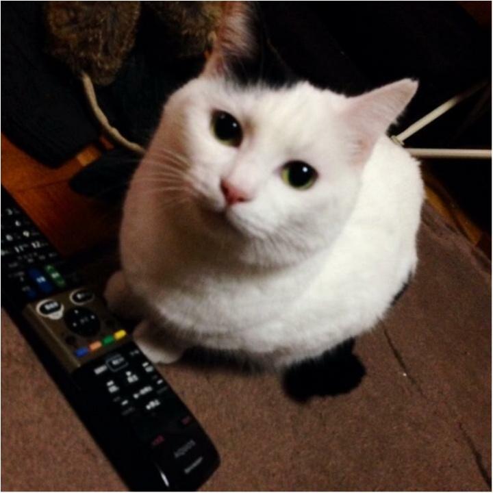 猫好き集まれっ♡ 今日のにゃんこ✳︎モアハピver♡_8