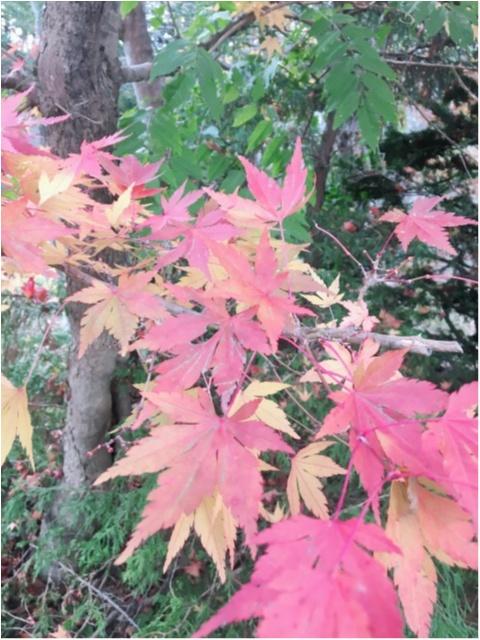 紅葉シーズン!!到来!!北海道の見頃は終わってしまいましたが…公園にいけば、もう少しだけ秋を感じられそうです♡_1