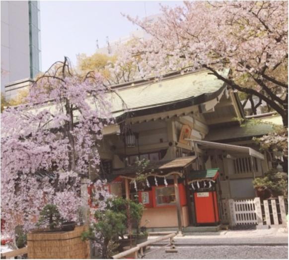 【大阪パワースポット巡り】桜のキレイな露天神社で春に向けて良縁祈願を♡_1