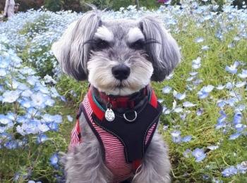 【今日のわんこ】姉妹犬との再会に喜ぶサクラちゃん!