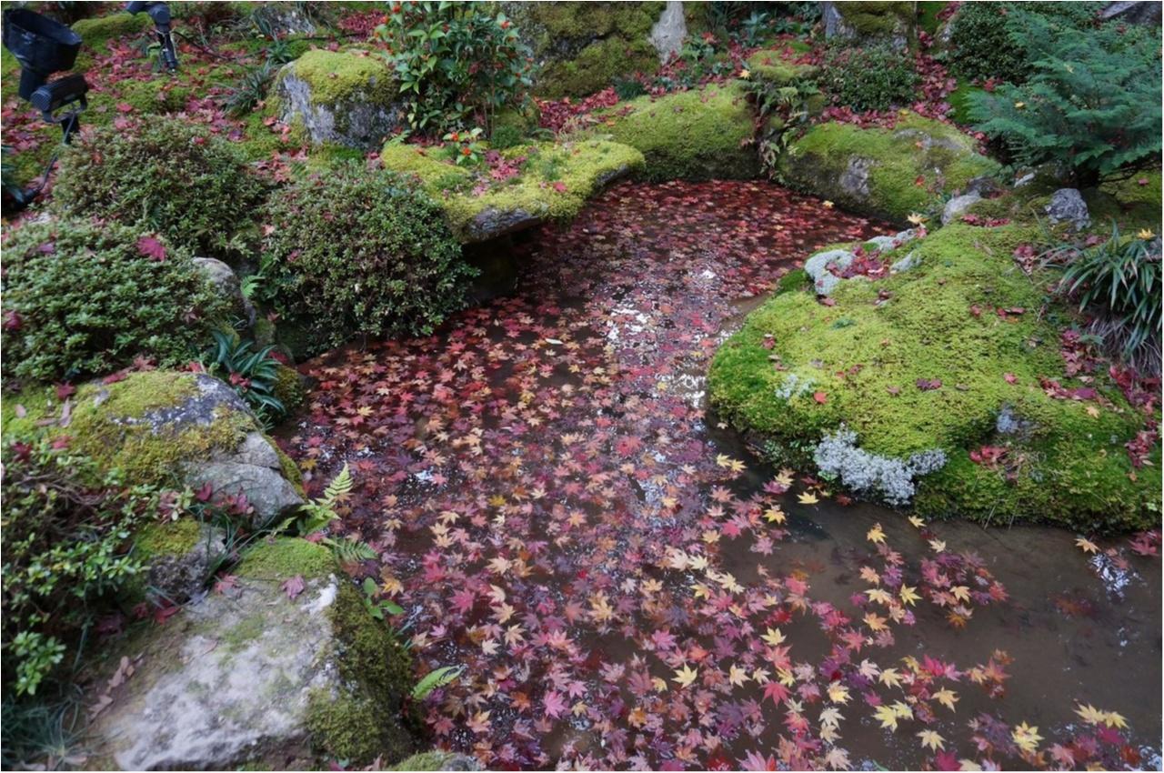 【関西おでかけ】のんびり散策できるオススメ紅葉スポット_4