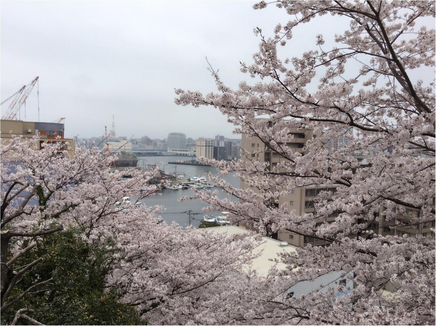 《公園はしご旅》in 福岡 今が見頃!とっておきの桜スポットをご紹介!!_3