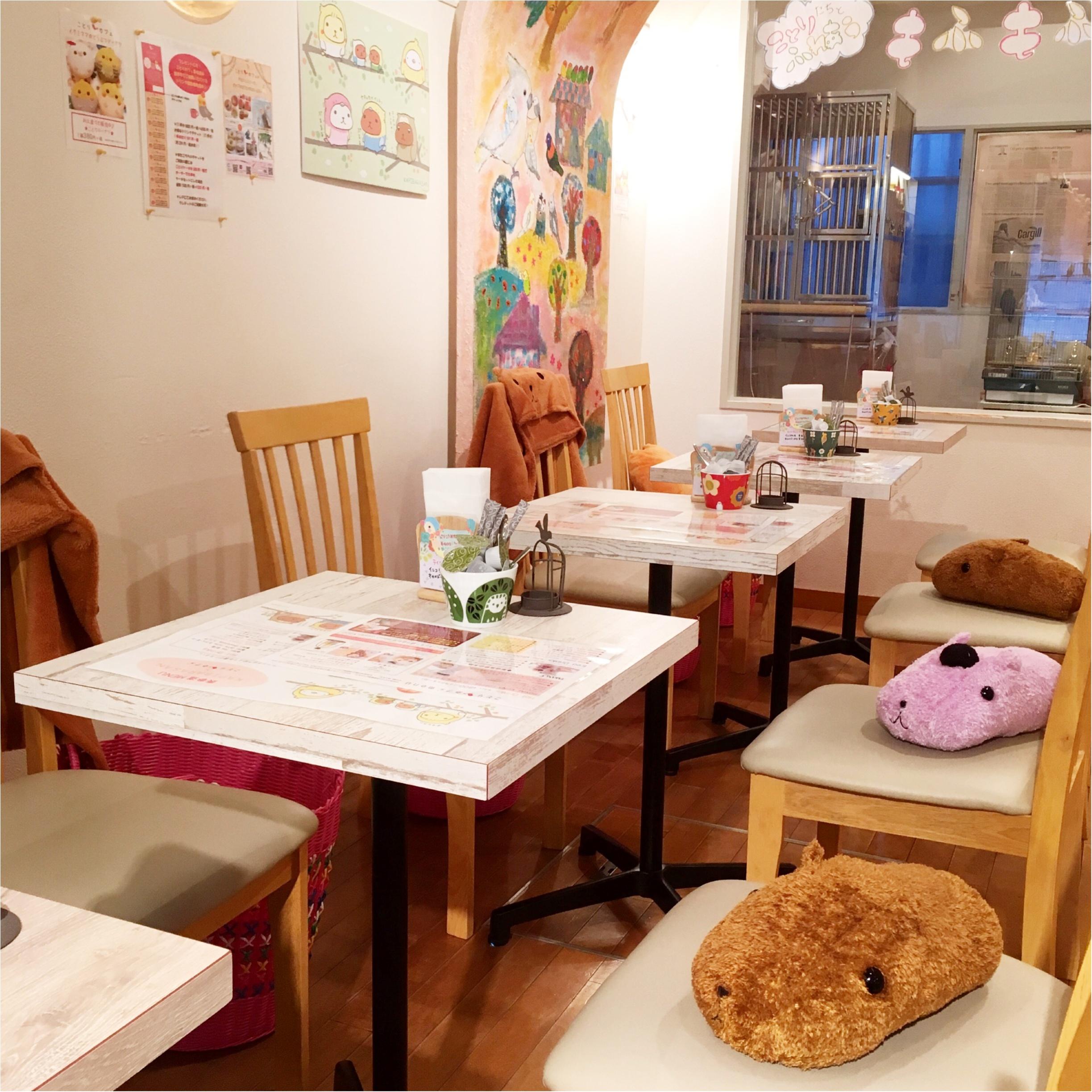 『カピバラさん×ことりカフェ』コラボ♡ことりカフェ表参道店でカピバラさんケーキを食べてきました(﹡´◡`﹡ )_4