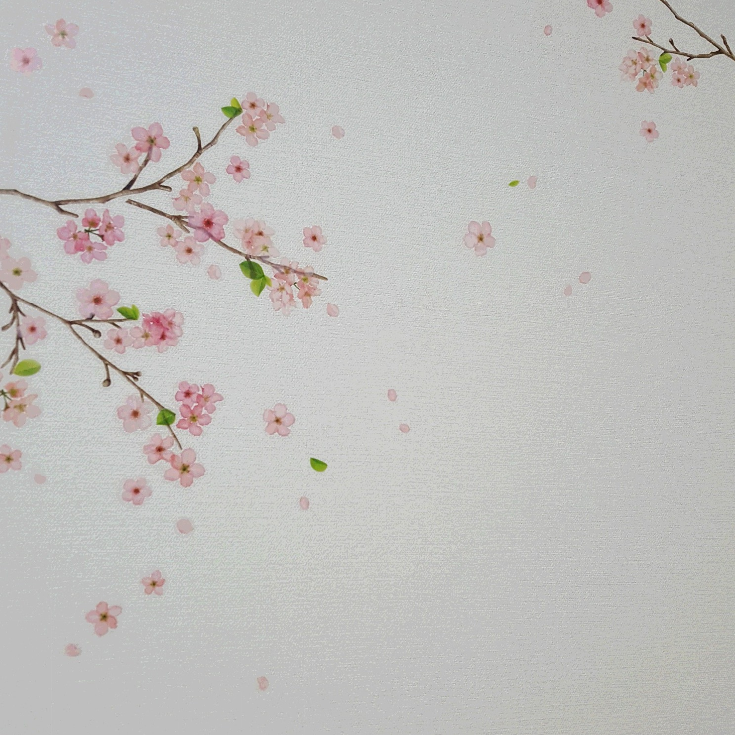 いつでも桜見。。簡単に模様替えできるウォールステッカーが使える!_3