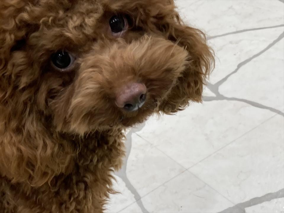 【わんこ好きさん必見!】puppy cafe RIO行ってきました♡癒されまくりスポット!_5