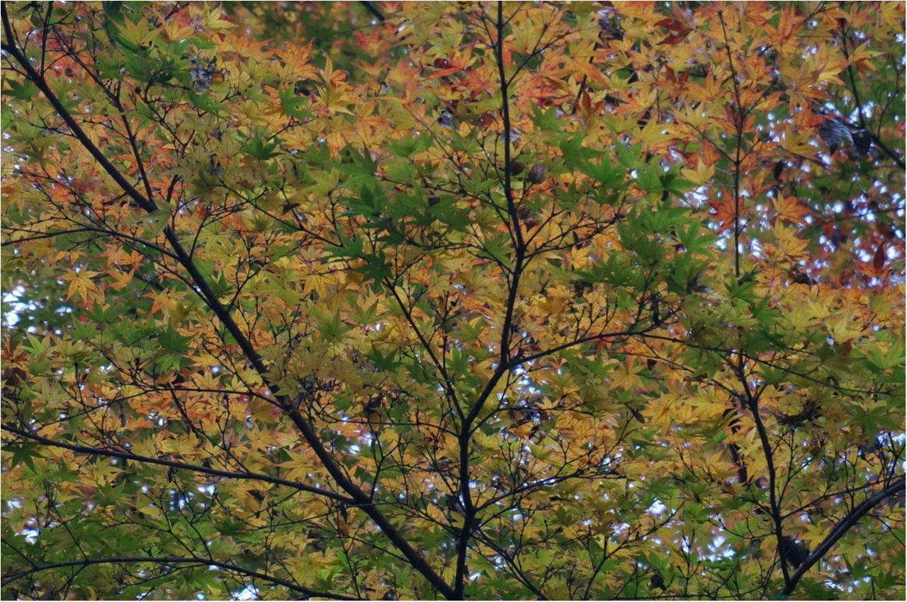 【関西おでかけ】のんびり散策できるオススメ紅葉スポット_2