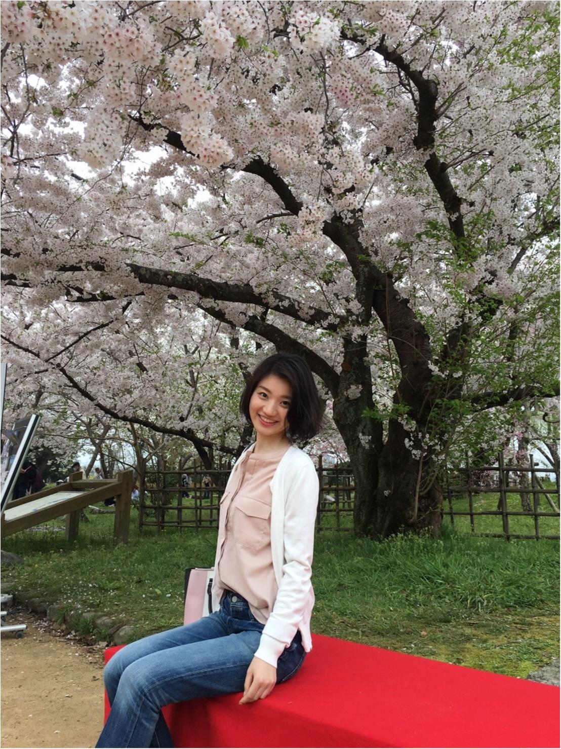 《公園はしご旅》in 福岡 今が見頃!とっておきの桜スポットをご紹介!!_6