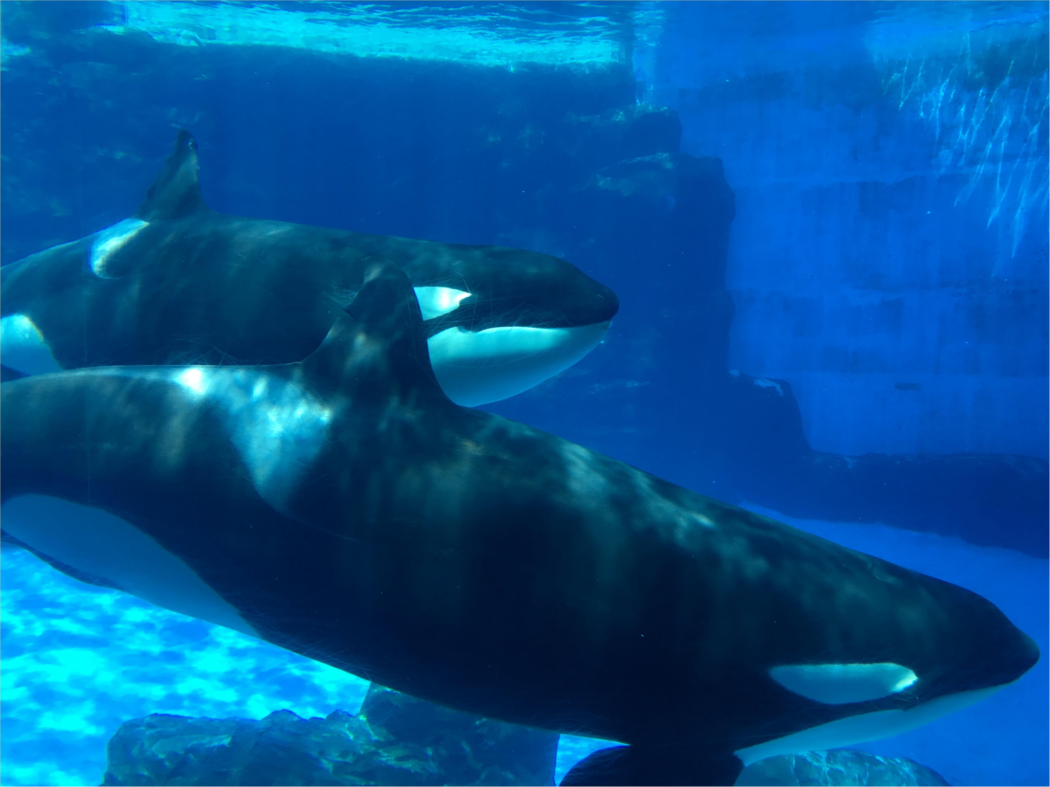 おさよ:夏休みは、名古屋港水族館がオススメ!♡_2