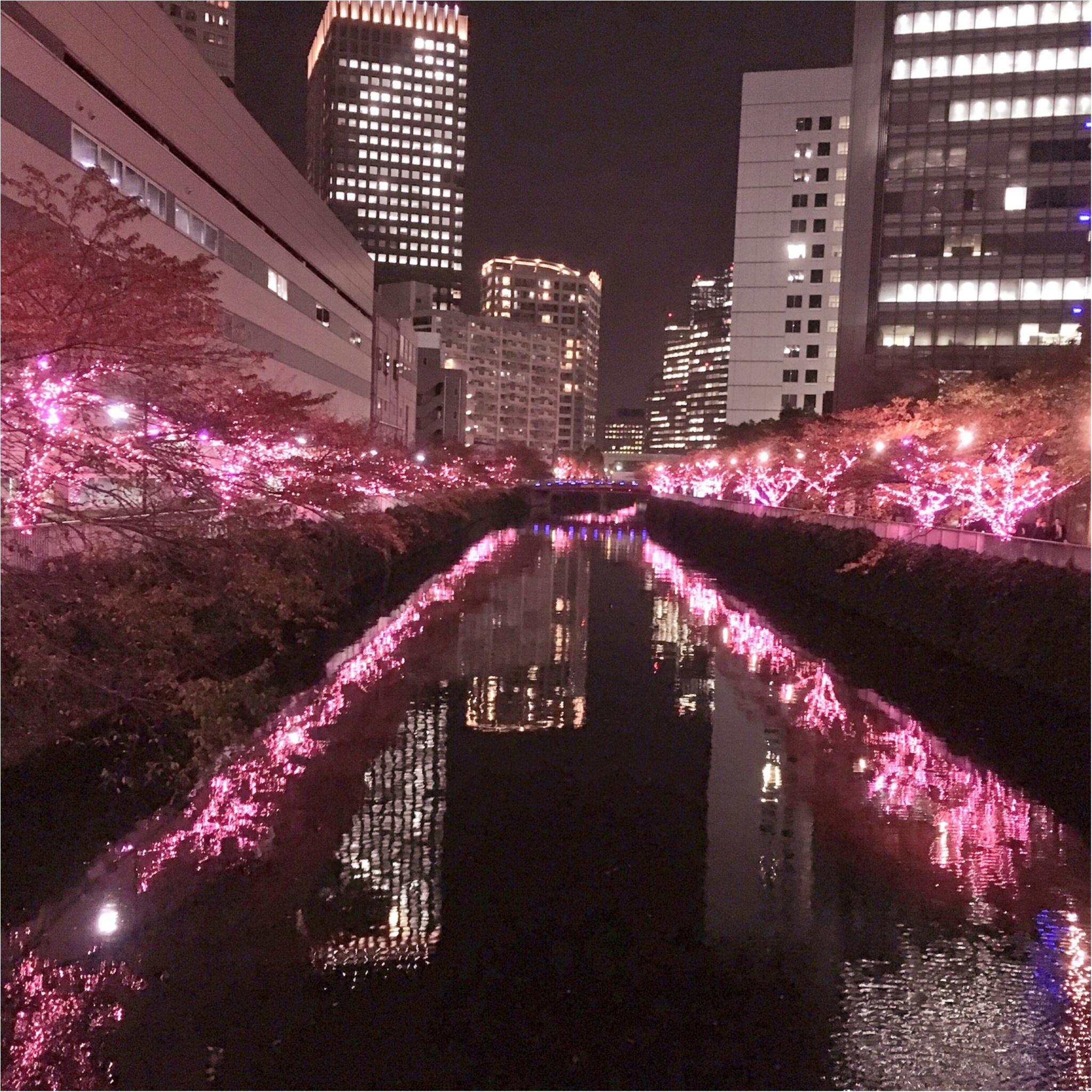 『目黒川』に『冬の桜』が咲きました(*°○°*)♡最新の『環境にやさしいイルミネーション』って???_2