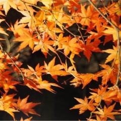 紅葉を満喫♩都心から二時間のとっておきの癒しスポット・秩父長瀞へ!