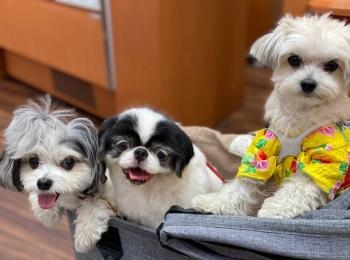 【今週のわんこ】太郎くんと愉快な犬仲間たちが久しぶりに集合!