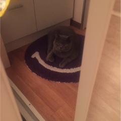 【今日のにゃんこ】甘えんぼ? それとも……。レオくんは、脱衣所で待機中