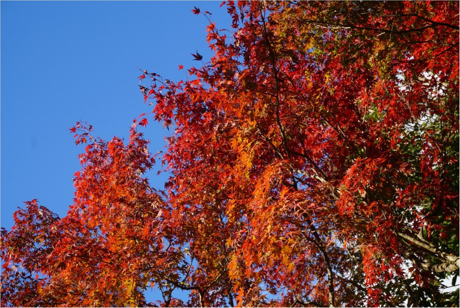 【おでかけ】いよいよ紅葉シーズン♡新宿から1時間以内の紅葉スポットって? _16