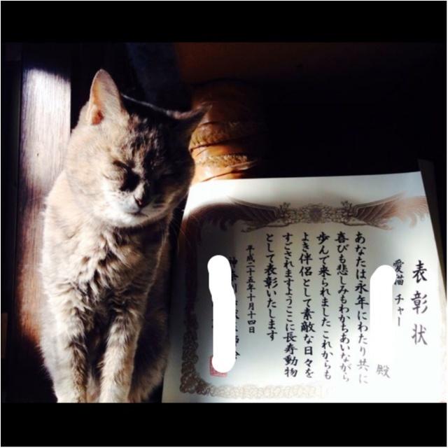 猫好き集まれっ♡ 今日のにゃんこ✳︎モアハピver♡_3