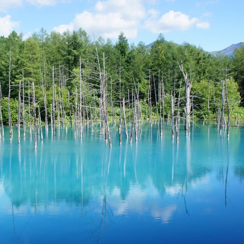 【女子旅におすすめ】北海道・美瑛の一度は見たい絶景スポット「青い池」