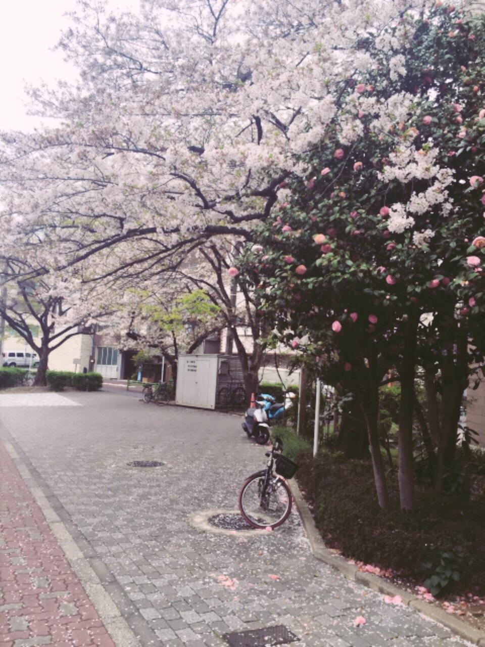 桜の命は短し、恋せよ乙女。_5