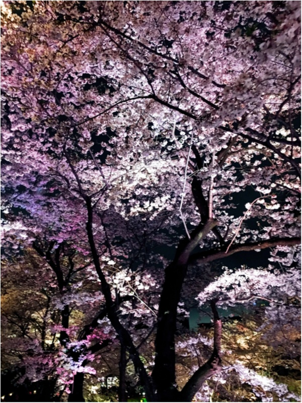 【CRAFT SAKE WEEK開催中】まだ間に合う!!都心で桜酒!!byじゅなrainbow*_4