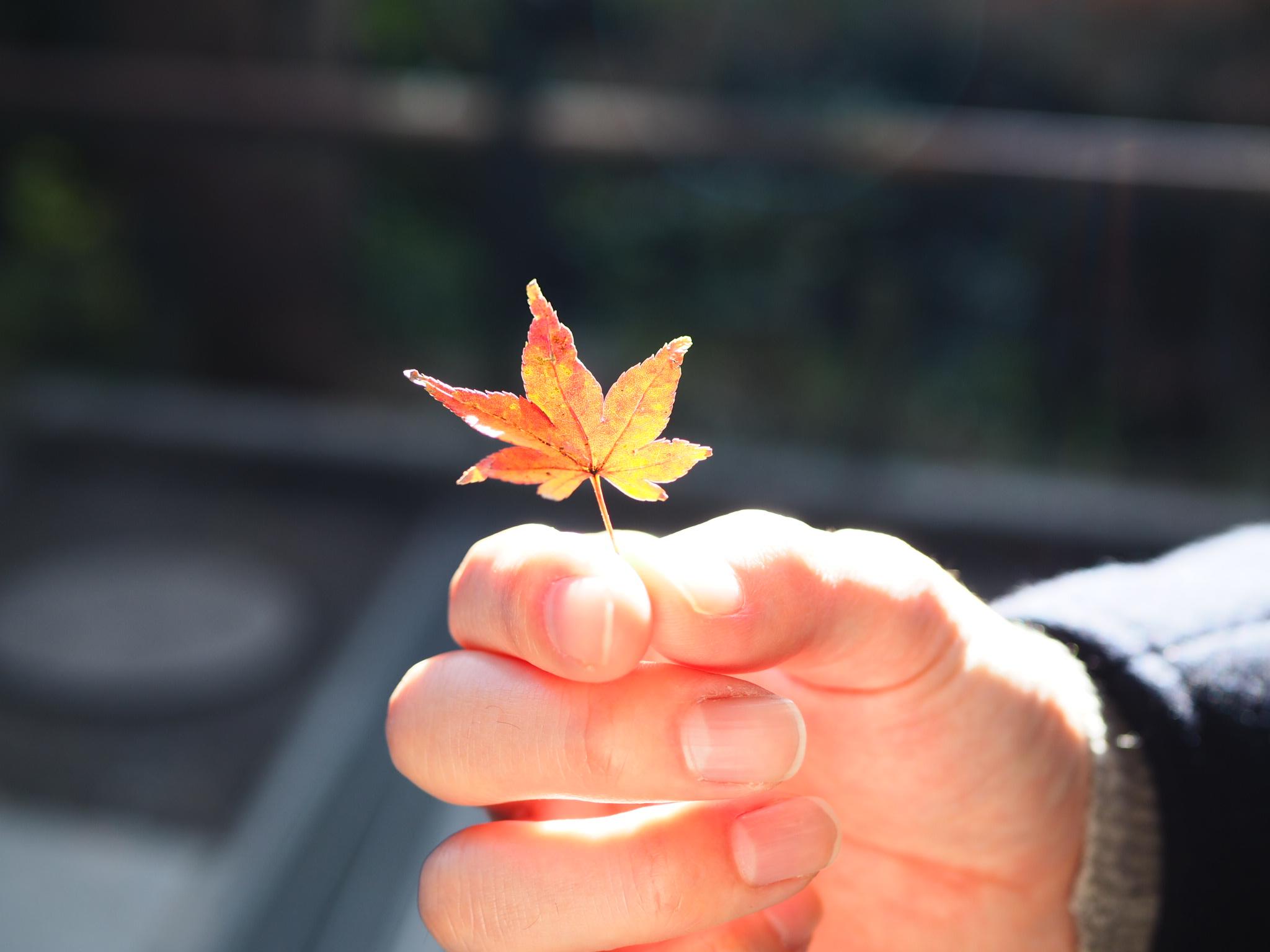 【#秋の鎌倉さんぽ】紅葉の鶴ヶ丘八幡宮♡ あの銀杏に会えるカフェ。_2