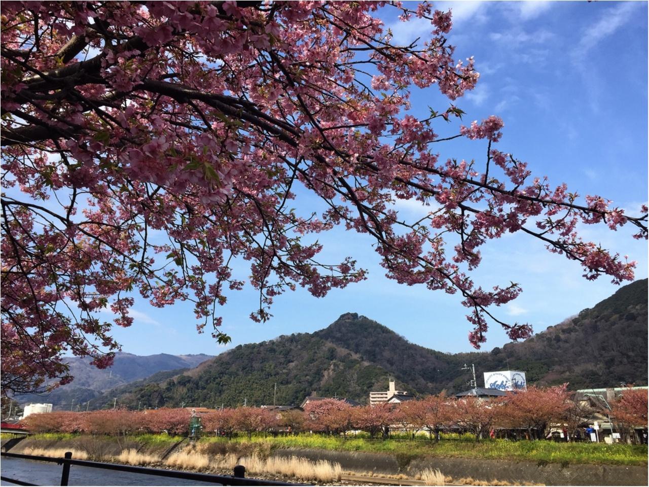 春の訪れを感じに…『河津桜まつり』へ行ってきました♡*_4