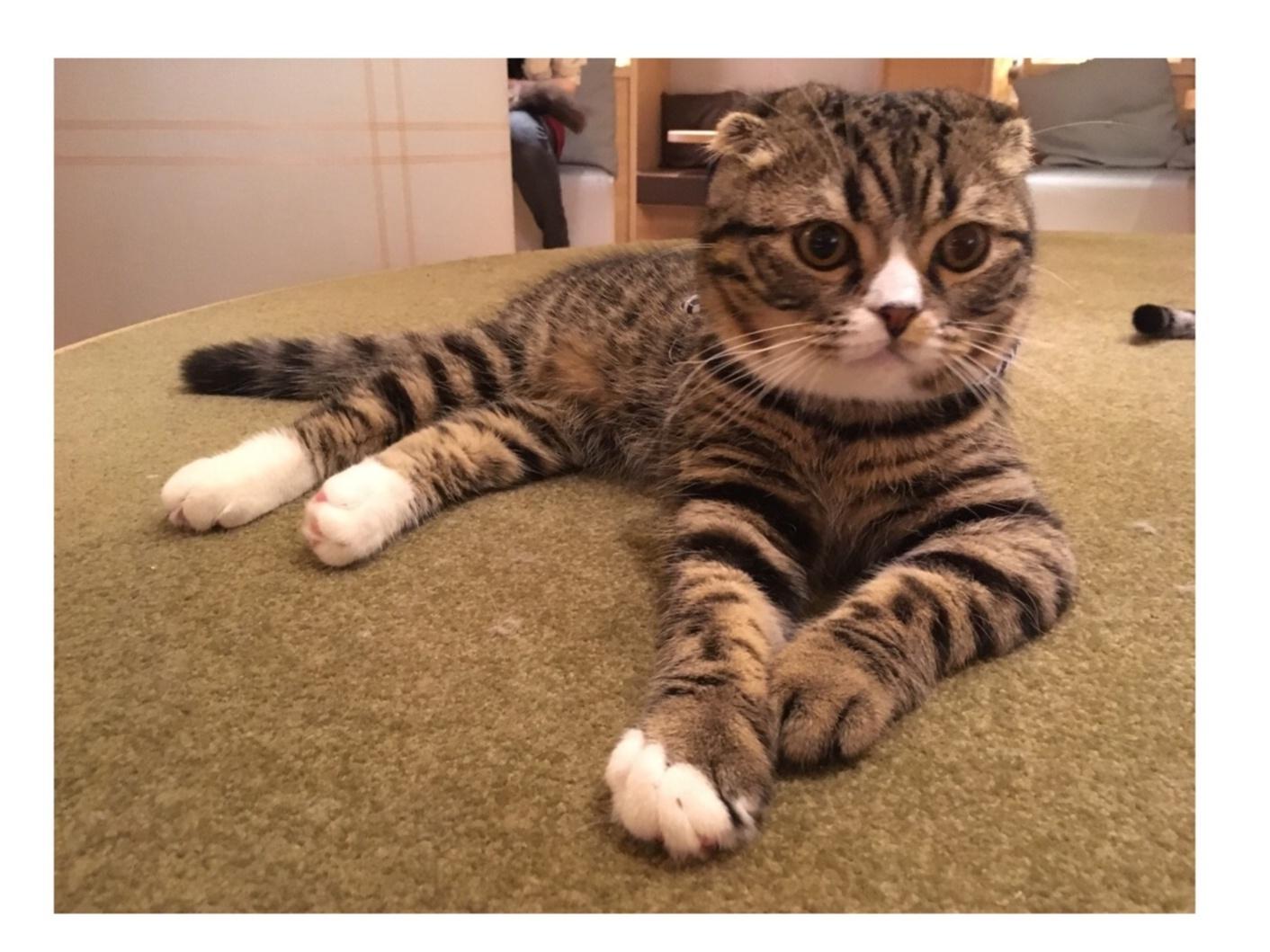 【GWはここで決まり!】日本最大級の猫カフェが新宿に⁈オシャレなラウンジカフェで可愛い猫たちに癒される!_12