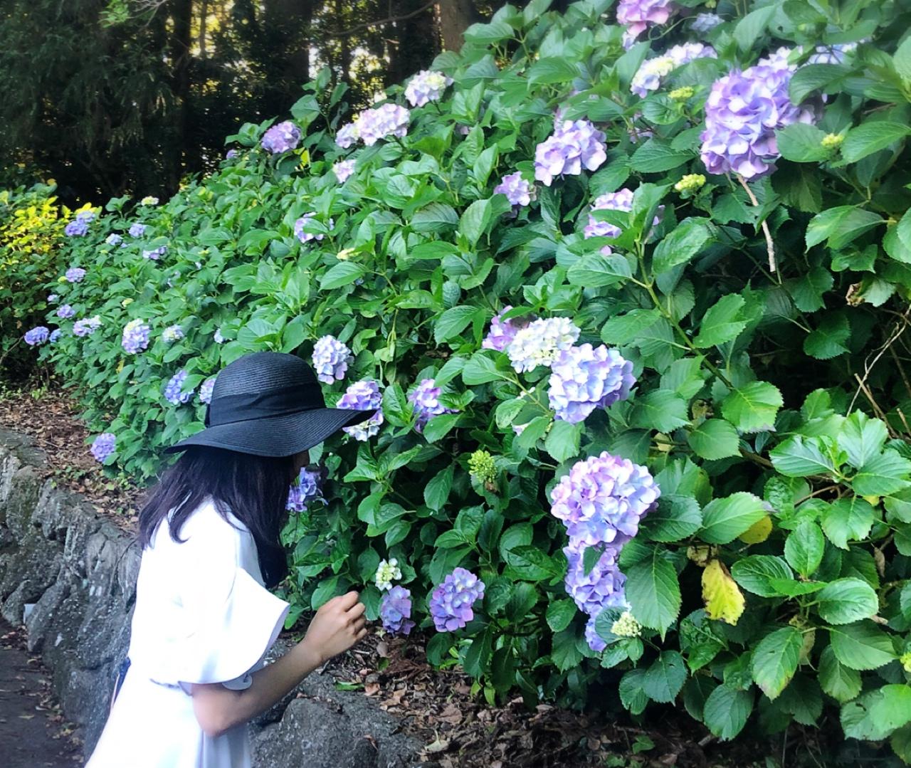 【#静岡】シーズン真っ只中♡4000株の満開のアジサイが可愛すぎる癒し空間へ行ってきました❁_4
