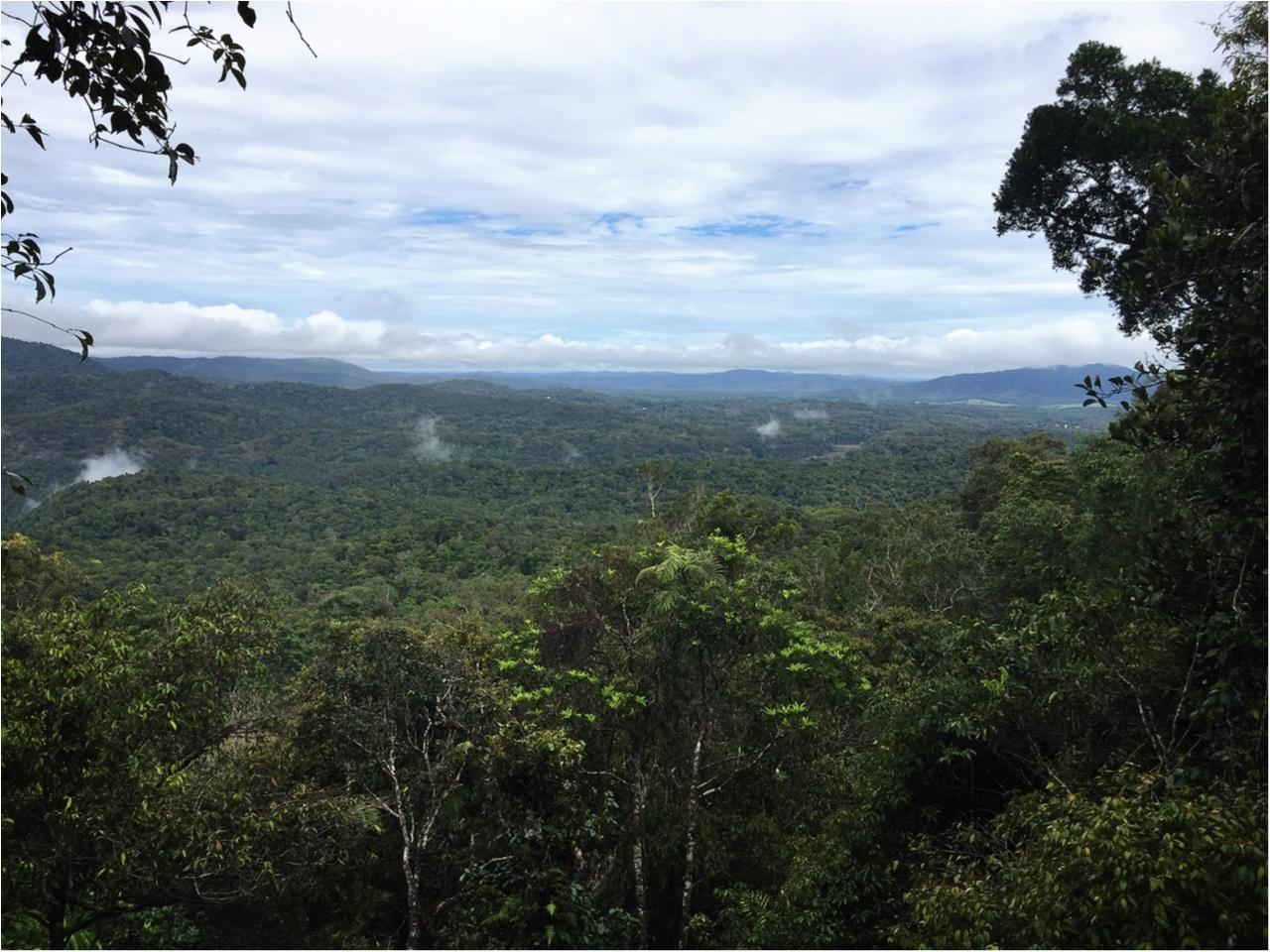 海も森林も大自然をまるっと満喫するなら《オーストラリア・ケアンズ》へ!_6