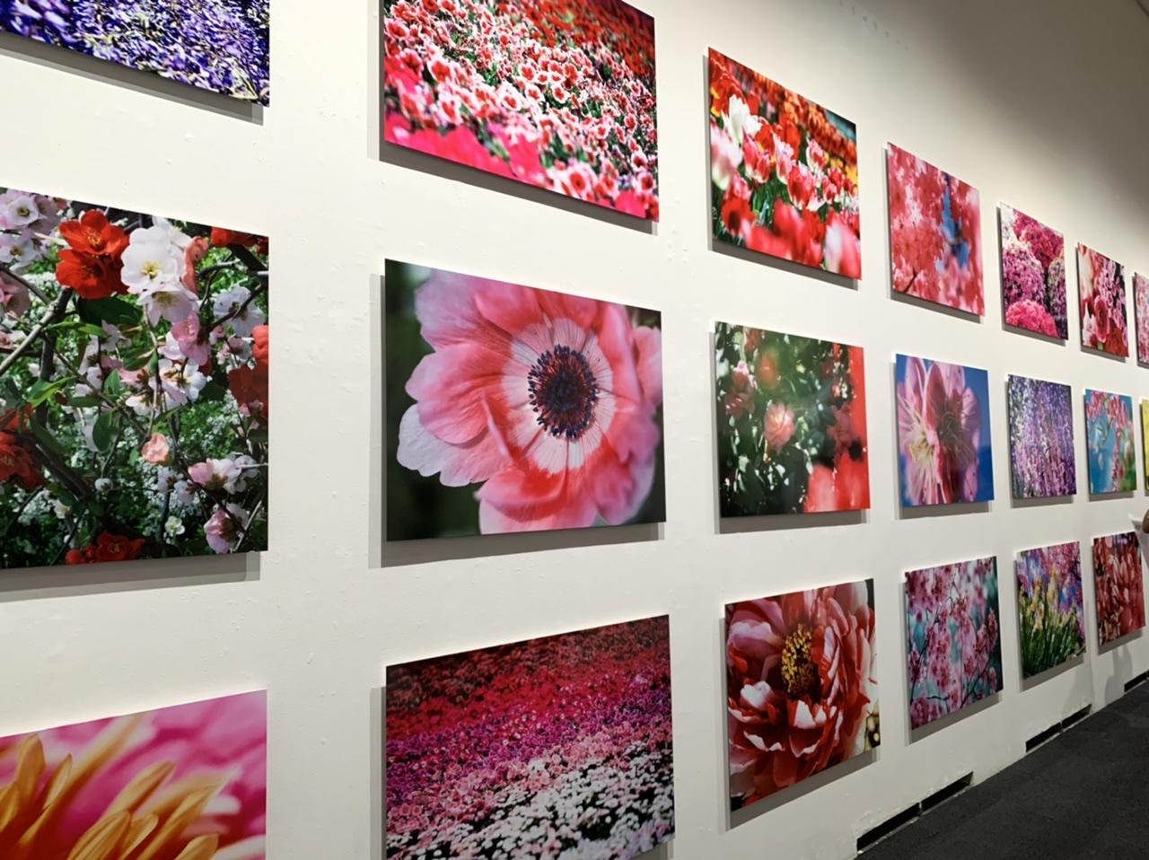 11/14(日)まで!上野の森美術館で開催中の蜷川実花展に行ってきました!_4