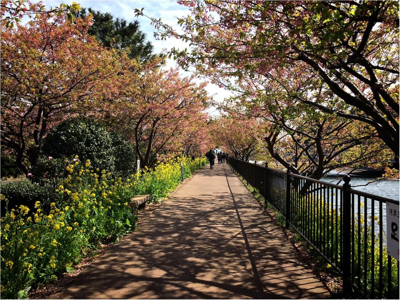 春の訪れを感じに…『河津桜まつり』へ行ってきました♡*_3