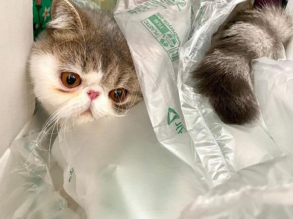 ダンボールの中、緩衝材に埋もれる猫・こたつくん