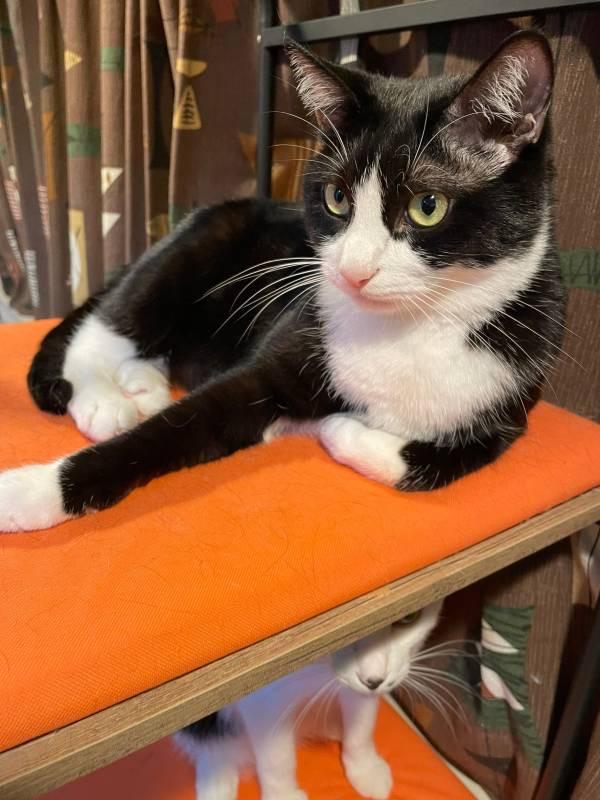 キャットタワーに乗る猫・ルウくんとベルくん