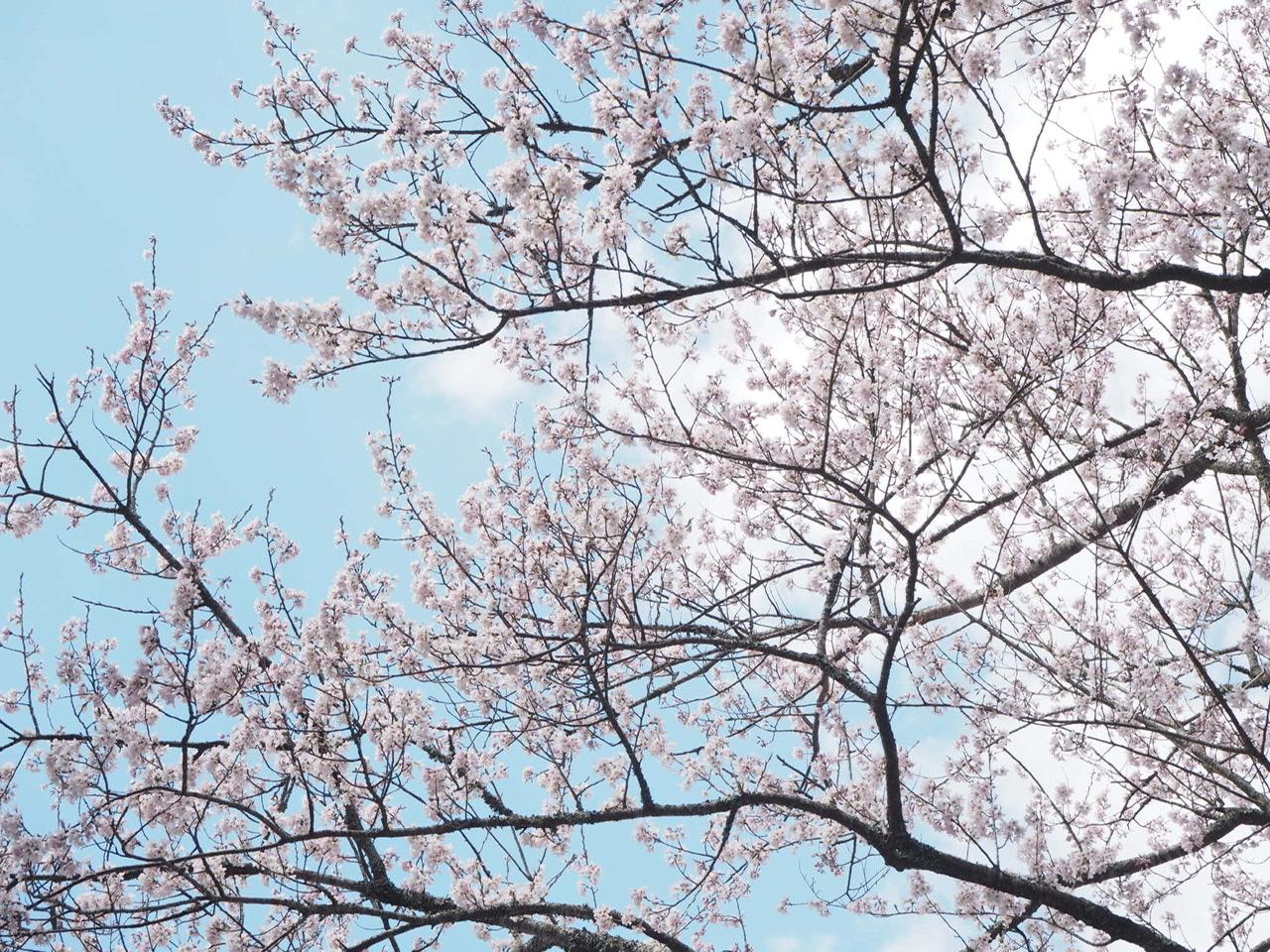 【女子旅におすすめ】一生に一度はお伊勢参り。三重県「伊勢神宮」で開運旅★_16