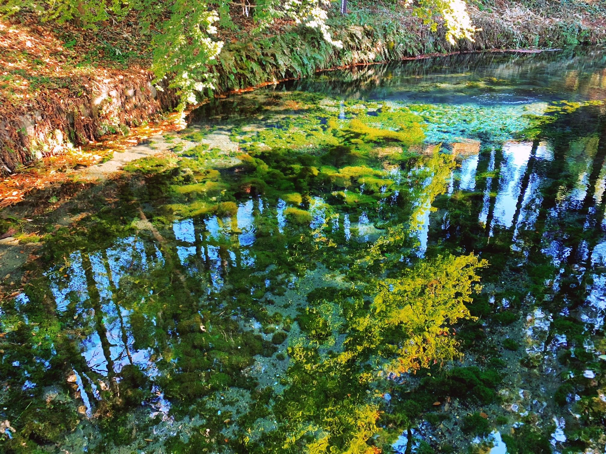 【女子旅】煌めく水面が幻想的!名水百選にも選ばれた水源が綺麗♡_3