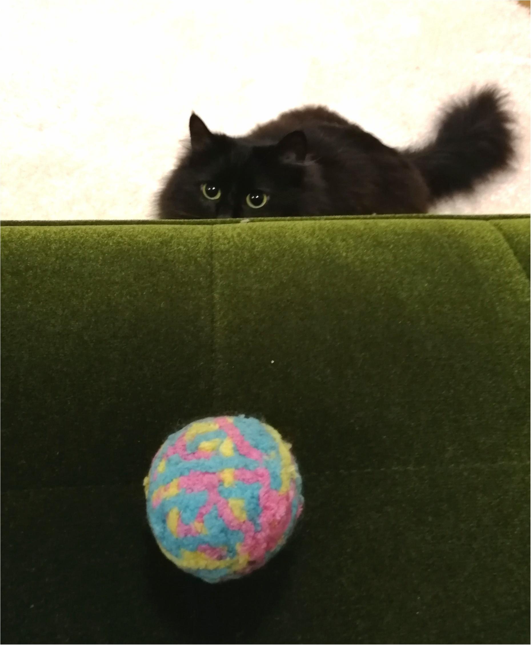 【今日のにゃんこ】狙いを定めて……! ゆらちゃんとボール♡_1