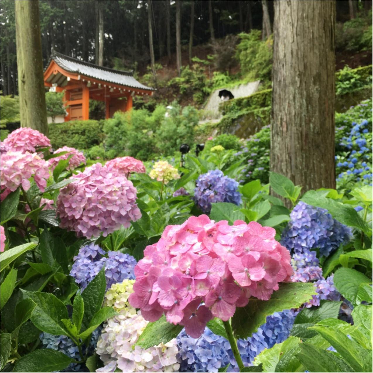 梅雨の時期に見たい♪紫陽花の名所へおでかけ…*見つけたハートの紫陽花♡_1