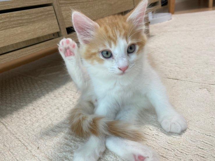 【ペット】うちの猫が可愛すぎる_3